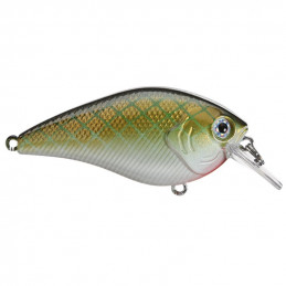 Green Copper Shad - XB-1...